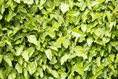 植物壁画 免版税库存照片