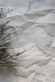 植物多汁植物词根老被弄皱的纸背景的  背景,空间 免版税库存图片