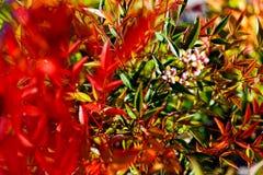 植物天堂般的竹子 免版税库存照片