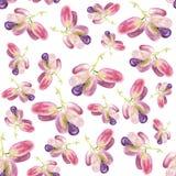 植物学例证水彩在白色背景的葡萄果子 无缝的水彩样式 库存照片