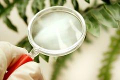 植物学 库存照片