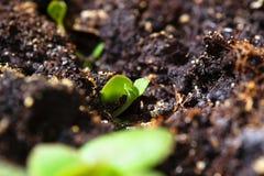植物宏观摄影在春天 免版税库存照片