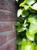 植物对墙壁,战斗! 图库摄影