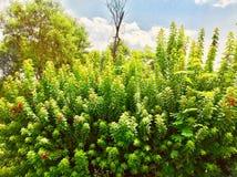 植物小叶子  库存照片