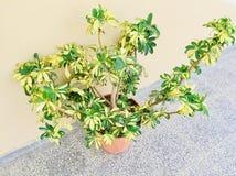 植物小叶子  免版税库存照片