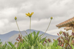 植物山和云彩 免版税库存照片