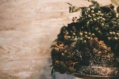 植物布置、干花、莓果和青苔 库存图片