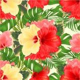 植物布置,与美丽的黄色桃红色和红色木槿,棕榈、爱树木的人和榕属葡萄酒导航编辑可能的例证 免版税图库摄影
