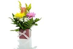 植物布置 免版税库存图片