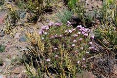 植物干旱 库存照片