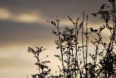 植物平安的场面在退色的白天 库存照片