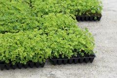 植物幼木支持的 免版税库存图片