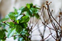 植物开花一个,另外一半死了 免版税图库摄影