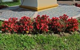 植物开花的红色花在修道院庭院,塞尔维亚里 免版税库存图片