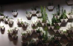 植物形状庭院 免版税库存照片