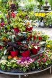 植物待售在托儿所 免版税库存图片