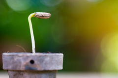 植物微小的小的幼木花盆的 图库摄影