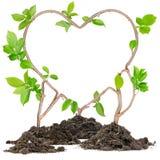 植物心脏 免版税库存照片
