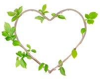 植物心脏 库存照片