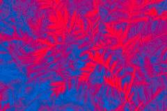 植物快乐,五颜六色的背景  免版税库存图片