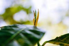 植物悟性和发芽 免版税库存图片