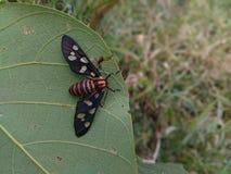 植物昆虫 免版税库存图片