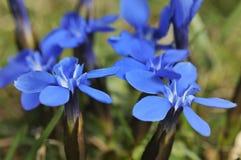 植物春天 库存照片