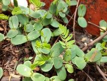 植物树叶子 免版税库存照片
