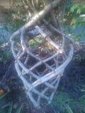 植物树干 库存图片