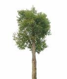 植物树 库存图片