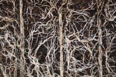 植物根 库存图片