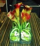 植物桌 库存照片