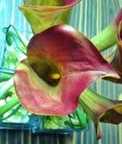 植物桌 库存图片