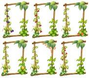 植物模板 库存图片