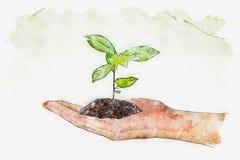植物水彩在手上在绿色背景 皇族释放例证