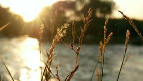 植物河水太阳 影视素材