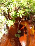 植物油脂 库存照片