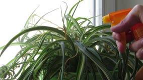 植物浇灌喷洒,特写镜头