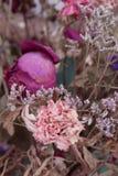植物照片平凡  免版税库存照片