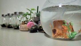 植物生活  免版税库存图片