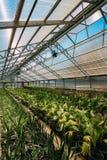 植物生长从在罐的土壤的棕榈树绿色新芽  免版税图库摄影