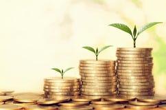 植物生长步与阳光的金钱堆 概念财务 免版税图库摄影