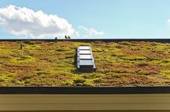 植物生长的屋顶和天窗 免版税库存图片