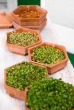 植物生长逐步采用扁豆发芽 库存照片