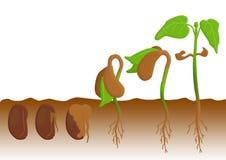 植物生长 库存图片