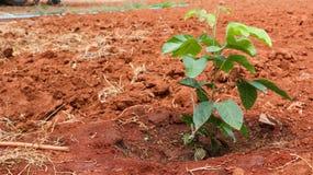 植物生长 免版税图库摄影