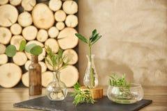 植物用在桌上的不同的玻璃花瓶 免版税图库摄影