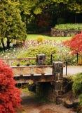 植物的五颜六色的庭院 库存图片