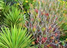 植物的五颜六色的棕榈庭院 免版税图库摄影