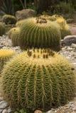 植物的仙人掌庭院 图库摄影